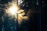 Sunburst - 172867358