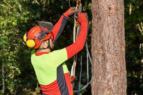 Baum Kletter Gurt : Baumkletterer mit säge und klettergurt holzfäller bei der arbeit