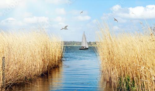 Leinwanddruck Bild idyllisches Ufer der Schlei bei Schleswig mit Segelboot und Möwen