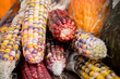 Colourful corn