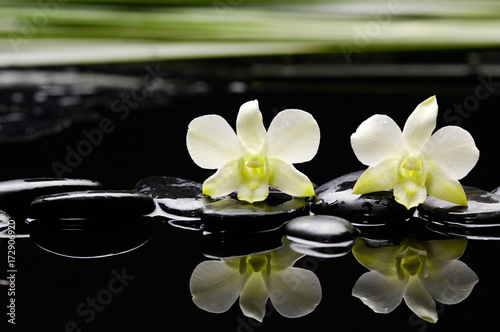 Keuken foto achterwand Spa Still life with two white orchid with stones and green plant