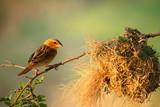 Bird standing on a branch - 172910145