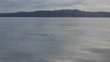 bright green kelp on morning water - 172928731