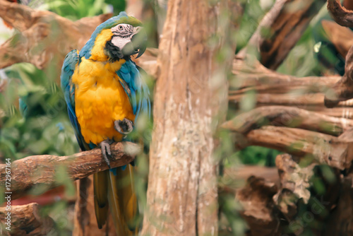 Fotobehang Papegaai Colorful parrot wildlife animal in nature background