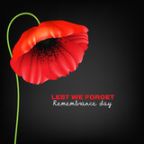 Remembrance Day greeting card. Beautiful. realistic red poppy flower on black background with lettering - 172978993