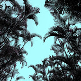 Palms Minimal art design Print tropical style