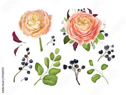 Vector floral big element set: pink peach ranunculus flower bouquet blue berry branch, forest fern, tree fall leaves art foliage objects in watercolor style collection. Decorative elegant illustration