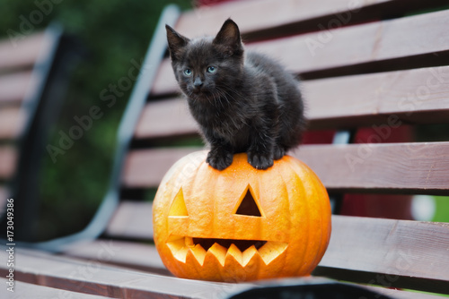 black kitten sitting on top of a carved pumpkin Poster