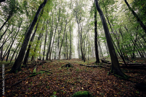 Aluminium Betoverde Bos Blick Bergauf im Wald mit Nebel
