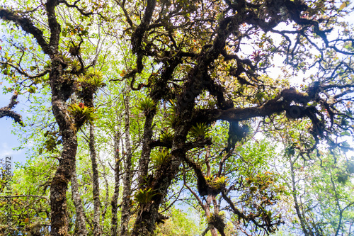 Aluminium Betoverde Bos Cloud forest covering San Pedro volcano, Guatemala