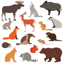 Cute Woodland Animals    Such As Fox Hare Wolf Moose Squirrel Sticker
