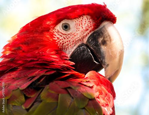 Aluminium Papegaai macaw parrot is looking sharp