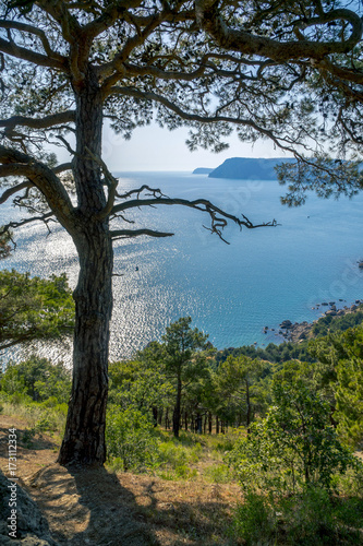 Foto op Plexiglas Blauwe jeans Black Sea Bay and Pine Tree on Crimean Mountains