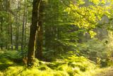 Budka lęgowa na drzewie