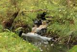 stream cascade water long exposure - 173175110