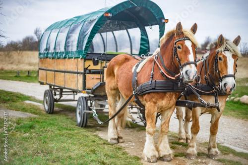 Leinwanddruck Bild Pferdekutsche, Kremserfahrt bei Kap Arkona auf Rügen