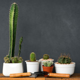 Adorable indoor cactus garden