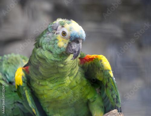 Aluminium Papegaai A green parrot in the garden.