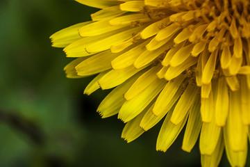 A circle of petals