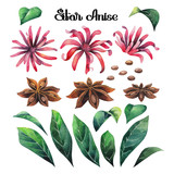 Watercolor star anise