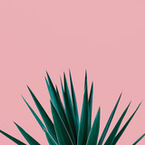 Plant on pink.  Tropical Greens  minimal art design - 173266361