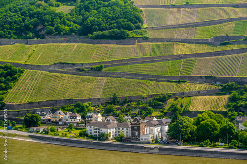 Deurstickers Wijngaard Vineyards at Rhine Valley in Germany