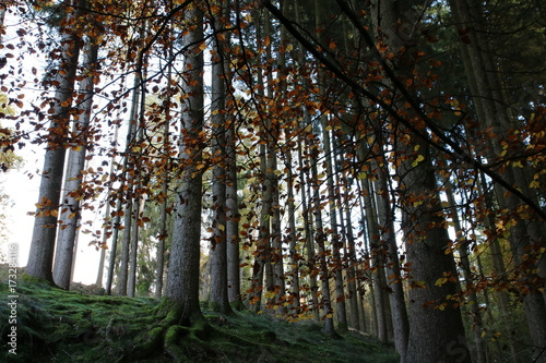 Aluminium Betoverde Bos Herbstwald