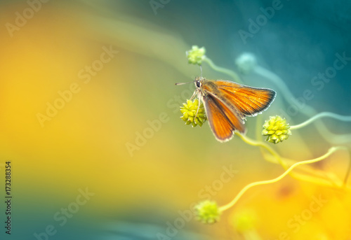 Orange moth in an ornate wavy plant on a yellow and turquoise background in spring in nature in the open air close-up. Template for text.