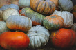 multi-colored pumpkin pile