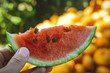 slice of watermelon in hand. on a blurred background