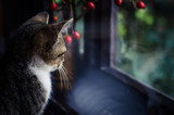 domestic cat behind window rear view