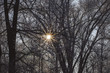 the sun shines through the branches of trees in winter