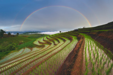 Rainbow over the rice paddy, Chiang Mai, Thailand