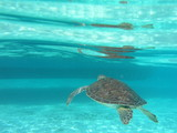 tartaruga - 173308769