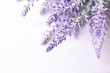 Lavender flower background