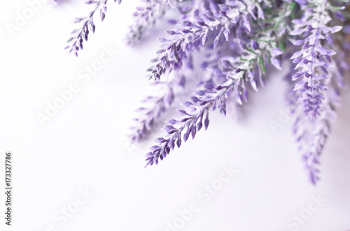 Lavender flower background - 173327786