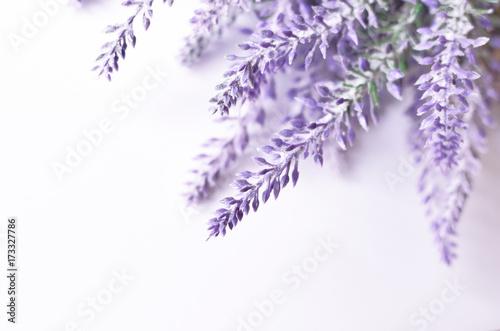 Lavender flower background - 173327786