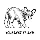 Hand drawn sketch style bulldog. Vector illustration isolated on white background.