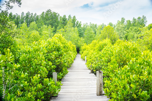 Keuken foto achterwand Lime groen Tung Prong Thong Golden Mangrove Field, natural areas in Rayong of Thailand.