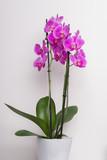 Grußkarte Orchideen