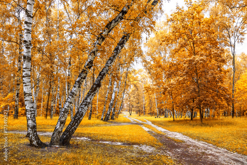 Fotobehang Oranje Birch grove with a trails crossroad on sunny autumn day, autumn time landscape