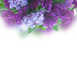 Bunch of fresh lilac flowers border over white background