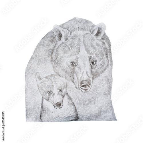 Portrait of realistic grey mother bear and cub hand-drawn - 173498195