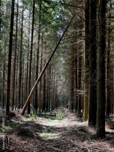 Keuken foto achterwand Weg in bos La forêt noire sud de la France
