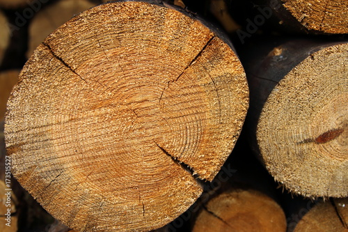 Tuinposter Brandhout textuur Pile of firewood as background texture