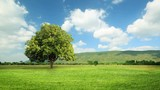 Green grass and tree in wind breeze with clouds running background, time lapse clip, green concept.  - 173518356