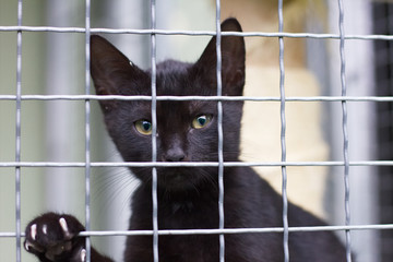abandoned black cat in an animal shelter