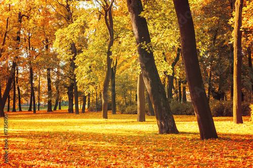 Poster Oranje eclat Autumn picturesque landscape in vintage tones- sunny autumn landscape park lit by sunshine. Autumn park in sunshine