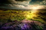 heart taking landscape lavande