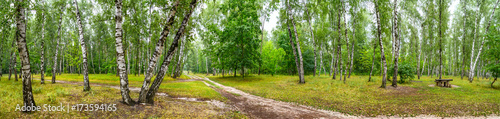 Fotobehang Berkenbos Birch grove with a road and bench on sunny summer day, huge panorama